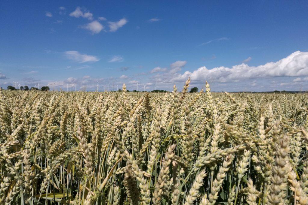, Landwirtschaftsministerium verzögert Glyphosat-Ausstieg, City-News.de, City-News.de