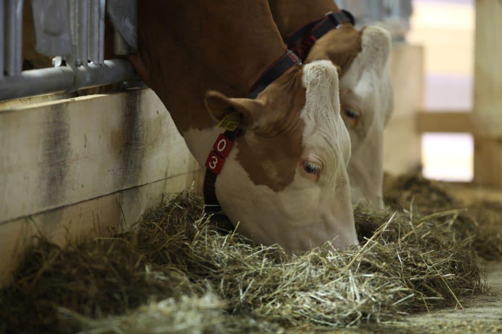 , Wiesenhof-Chef will EU-Zulassung von Alternativfutter für Nutztiere, City-News.de, City-News.de