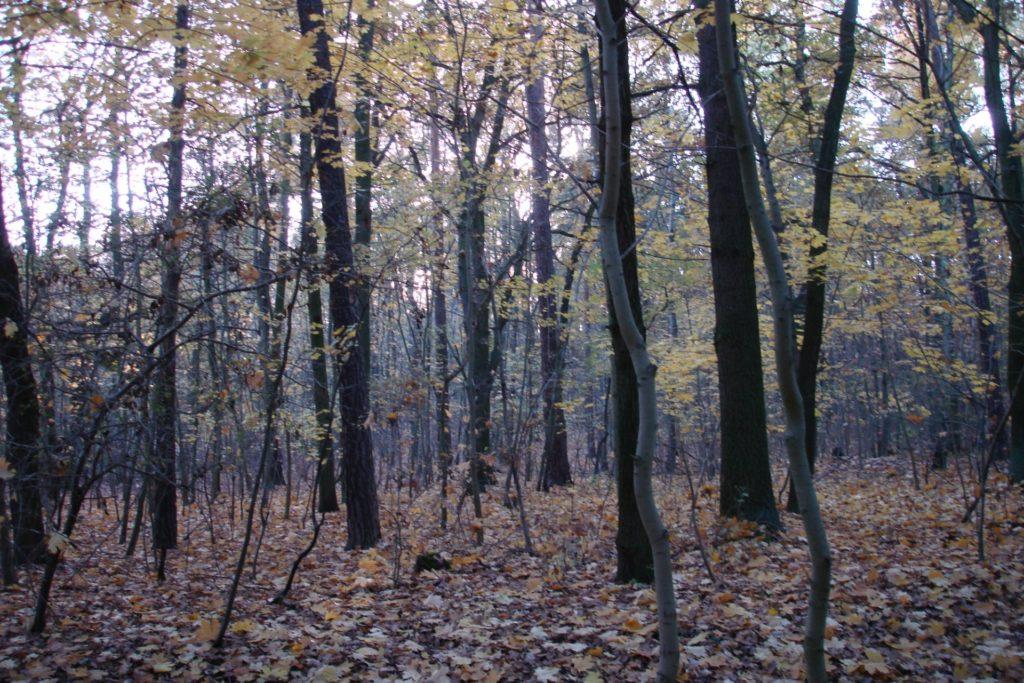 , Jagdverband: Deutschland braucht sechs Milliarden neue Bäume, City-News.de