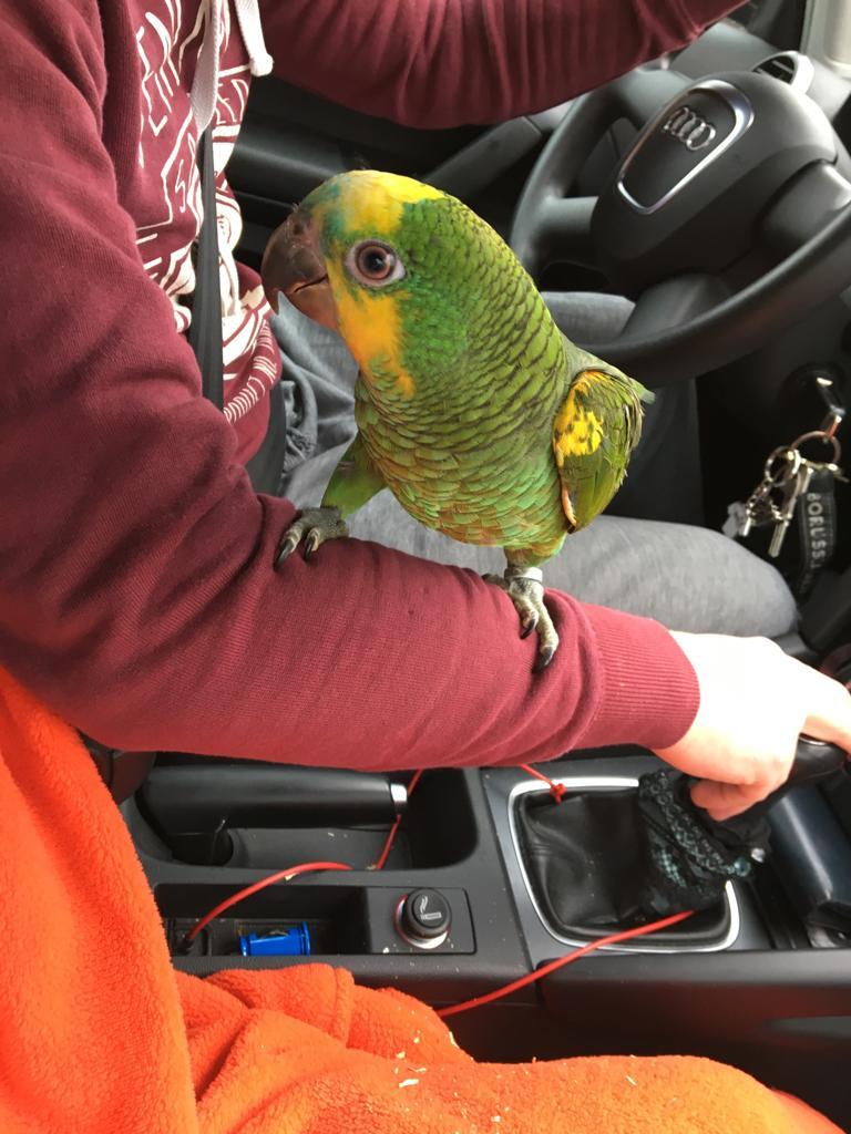 """Prinz, ? Entflohener grüner Papagei """"Prinz"""" vermisst, City-News.de, City-News.de"""