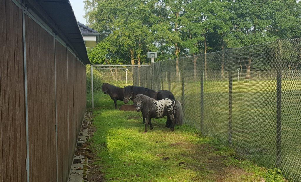 Alpakas transporter, Alpakas und Ponys in Transporter und Pferdeanhänger festgestellt, City-News.de