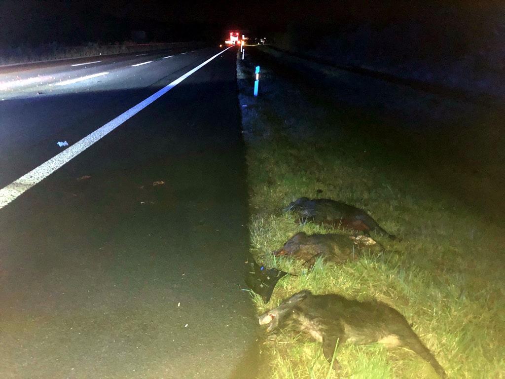 wildschweinunfall a60, Wildschweinunfall auf der A 60 mit 11 toten Wildschweinen bei Ingelheim, City-News.de, City-News.de