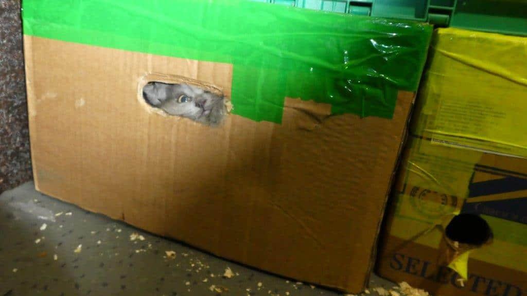 zoll katzen, Zoll und Veterinäramt befreien 26 Katzen aus Kleintransporter, City-News.de, City-News.de