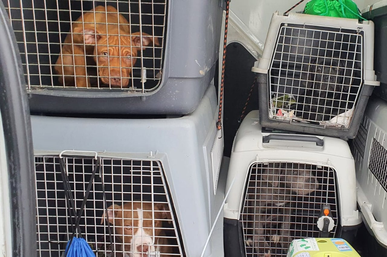 Illegaler Hundetransport, Illegaler Hundetransport Bundespolizei befreit 14 Welpen aus misslicher Lage, City-News.de