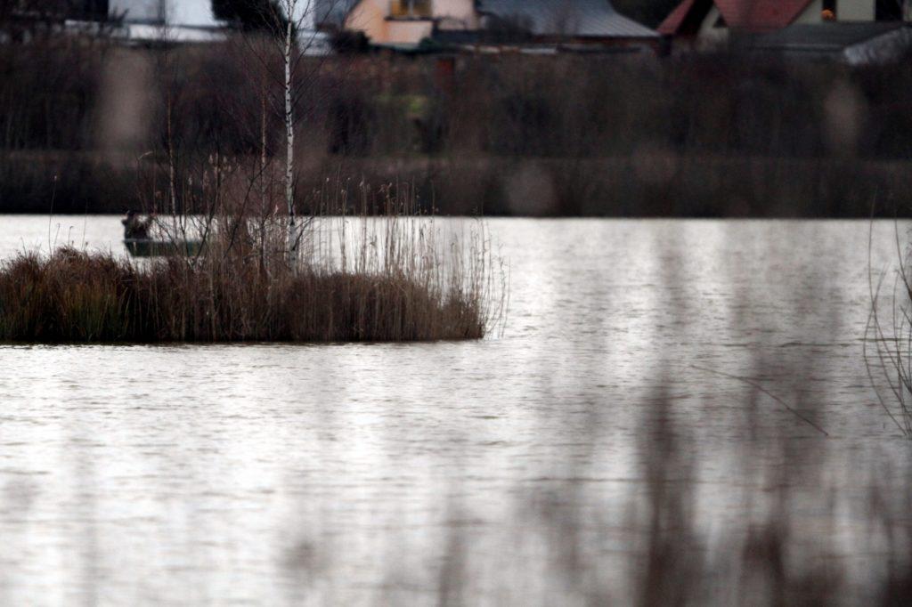, Afrikanischer Krallenfrosch bedroht Europa, City-News.de