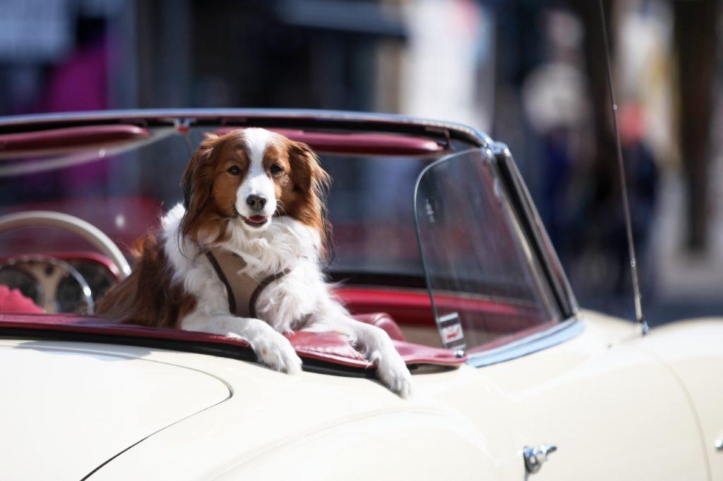 , Hundesteueraufkommen steigt 2020 auf Rekordhoch, City-News.de
