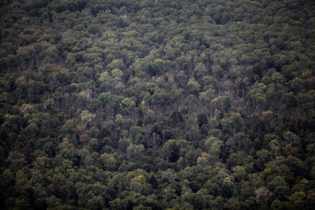 , Alle Bundesländer verfehlen deutsches Waldschutz-Ziel, City-News.de