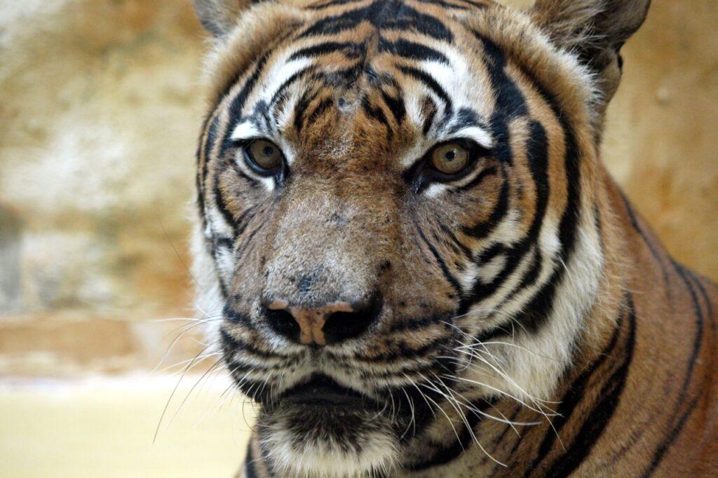 , Deutsche Zoos kauften seit 2005 über 1.900 artgeschützte Tiere, City-News.de