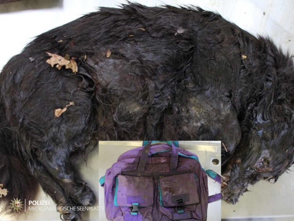 Toter Hund, Toter Hund in einer Tasche entdeckt – Zeugen gesucht, City-News.de