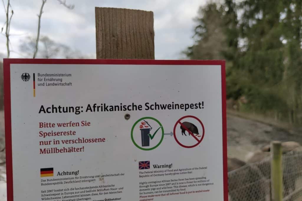 , Afrikanische Schweinepest im Landkreis Meißen nachgewiesen, City-News.de