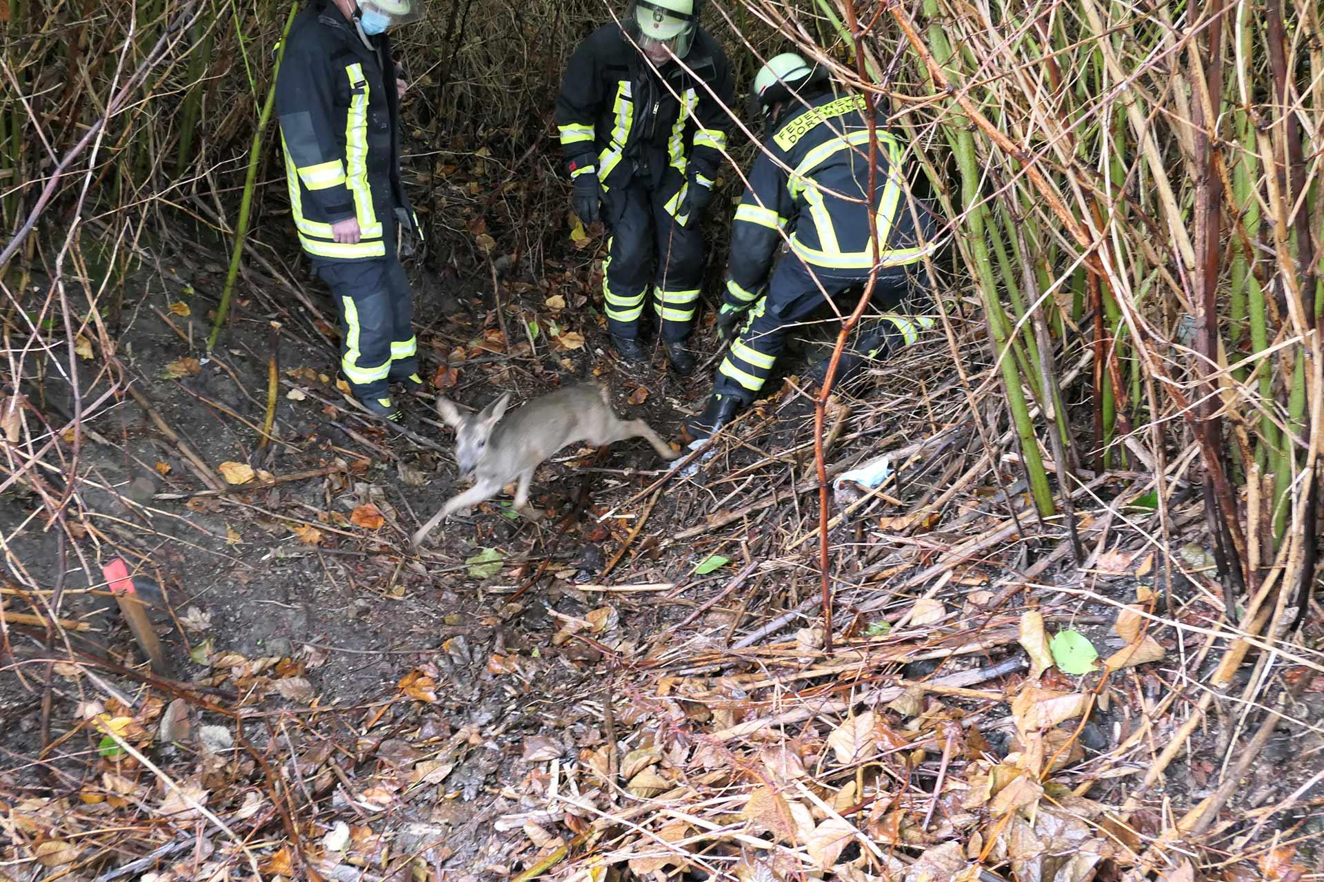 Reh Kanalschacht, Tierrettung – Junges Reh aus Kanalschacht befreit, City-News.de